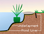Pond Edging Illustration